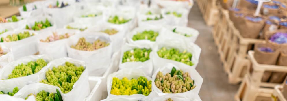 best temperature to store cut flowers - wholesale florist cold room