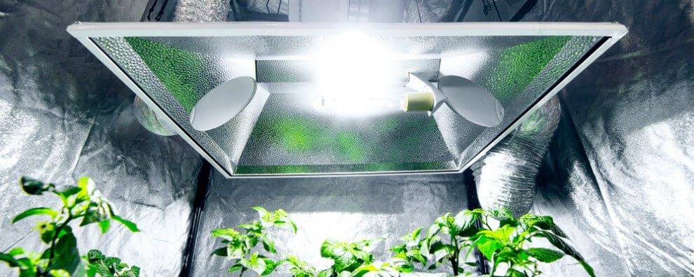 Hydroponic Setup That Needs Agricultural Chiller